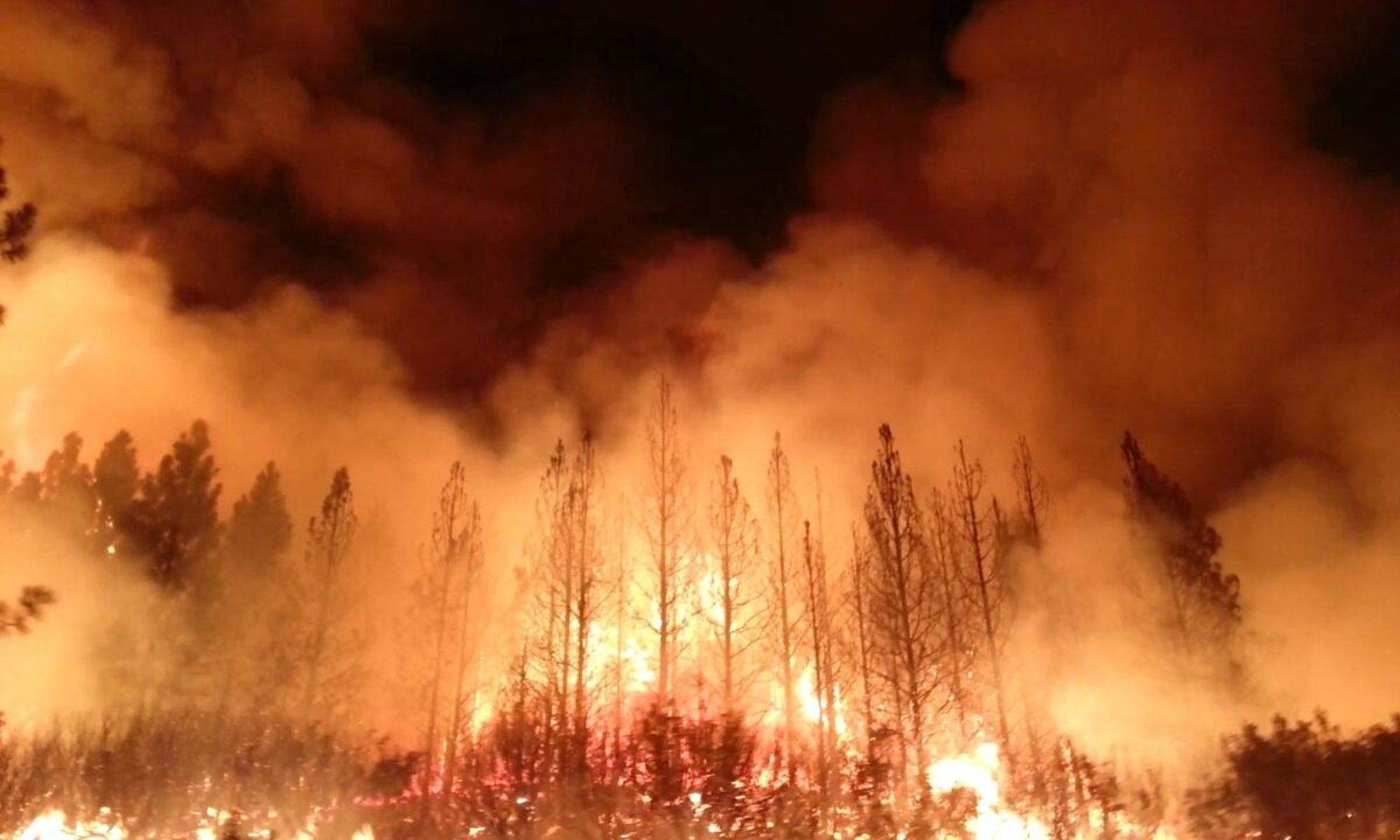 Global Wildfire Danger Explorer
